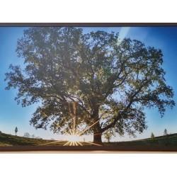 Panou radiant infrarosu DRAGUS, imprimat imagine Copac Verde 90/60cm 600W/500W 7kg 15-28mc